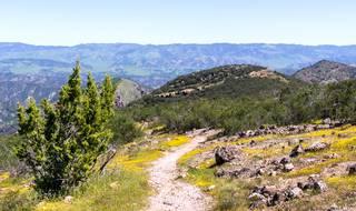 Aubrey Peak Wilderness