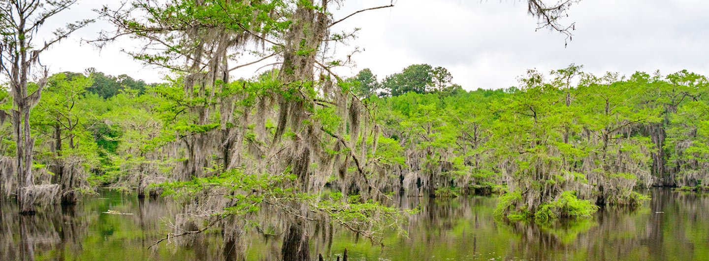 Caddo Lake State Park Guide | Outdoorsy on