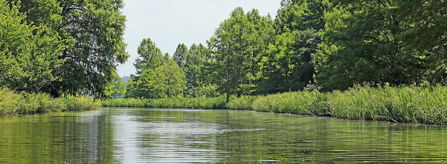 Reelfoot Lake State Park Guide | Outdoorsy