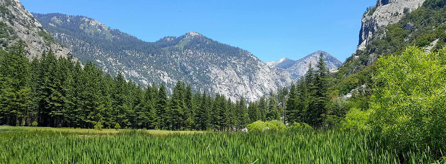 Sequoia National Park Guide   Outdoorsy